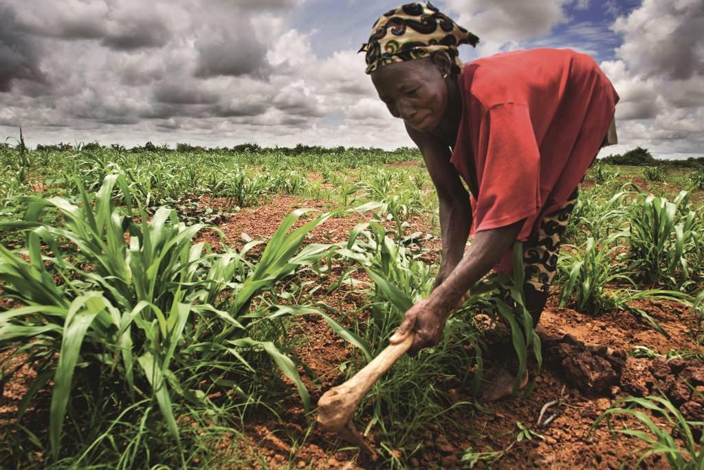 Wefarm e l'era digitale miglioreranno l'agricoltura anche in Africa