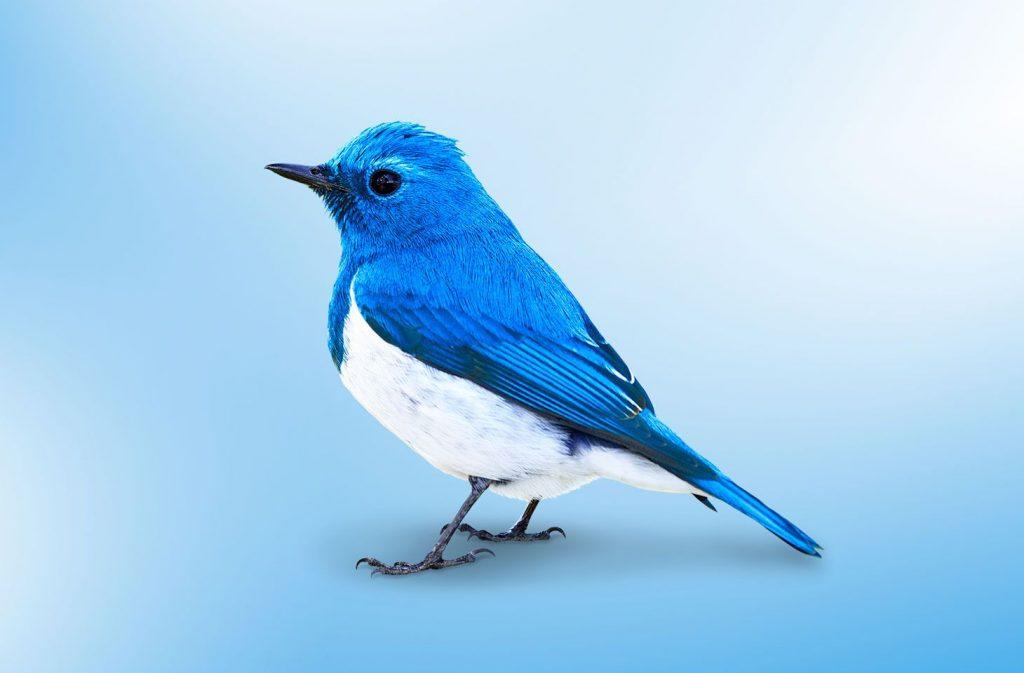 Twitter nuova finestra di chat
