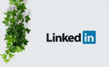 LinkedIn Newsletter per le aziende